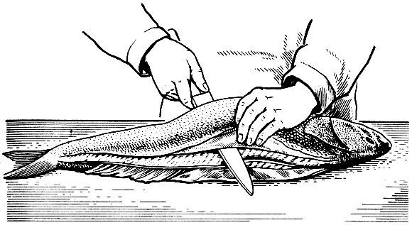 Рис. 4. Срезание мякоти с реберными костями (пластование)